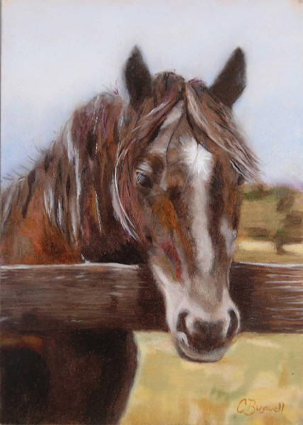 """Black Beauty of Ballina Farm"" by Caroline Buswell"