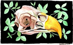 """Eagle Skull"" by Marni Manning"